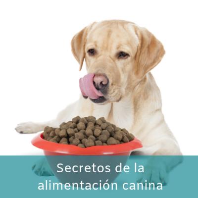 Secretos de la alimentación canina